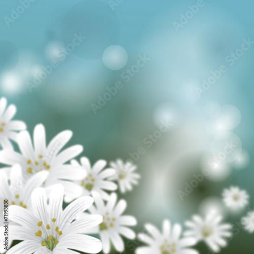 canvas print picture Floraler Hintergrund - Wildblumen Sternmiere