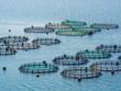 Fish farming off the coast of Greece - 71999029