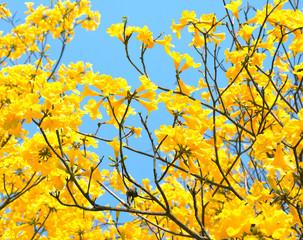 yellow flowers bloom in spring