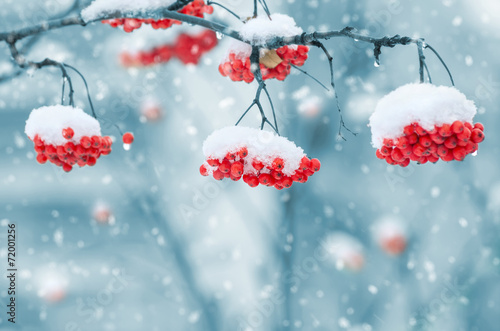 Aluminium Bomen Snow-covered mountain ash