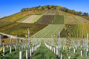 Weinberge in Weinsberg, Deutschland