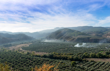 View of the Olive Trees near Cazorla, Jaen Province, Spain