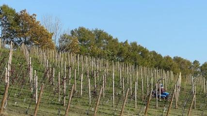 ワインのブドウ畑_1