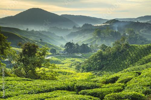 Foto op Canvas Koffie Tea plantation Cameron highlands, Malaysia