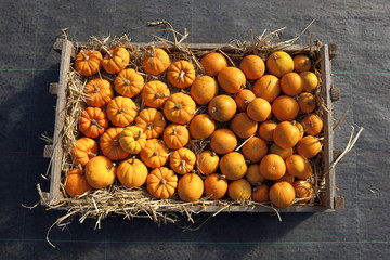 box of pumpkins and squashes