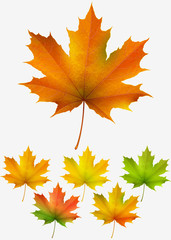 Collection of colorful autumn maple leaves