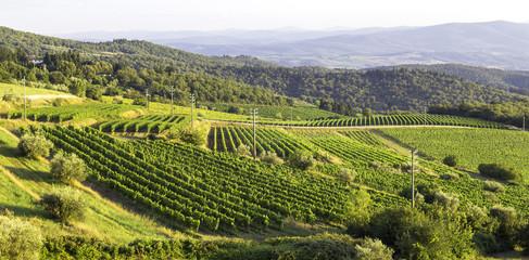 Monferrato vineyards hills. Color image
