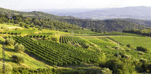 Monferrato vineyards hills. Color image - 72008078