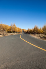 Road winding through spectacular fall colors