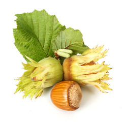 Hazelnuts on white background