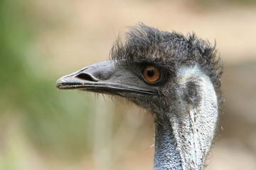 Portret van een struisvogel.