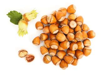 Hazelnut bunch