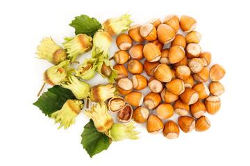 Top view of fresh hazelnut
