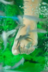 Exotic small fishes I do a peeling of feet