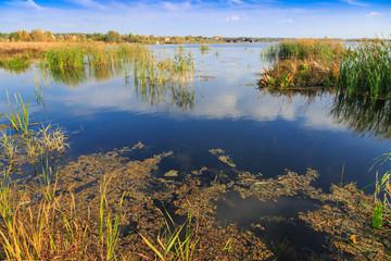 beautiful large lake with reeds