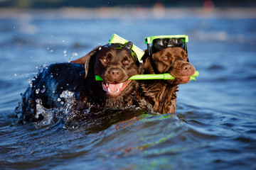 two diver dogs