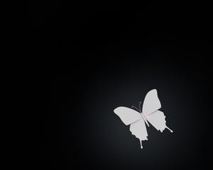 Vlinder van papier in spot light