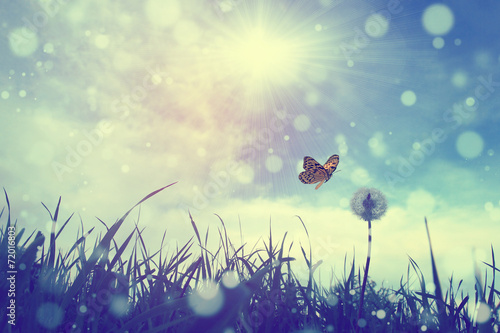 Foto op Canvas Bloemen Butterfly and dandelion