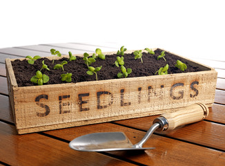 Seedling box