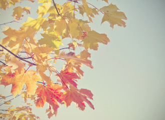 Autumn leaves with retro filter effect