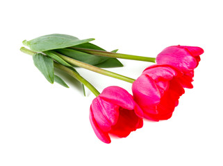 three pink tulips isolated