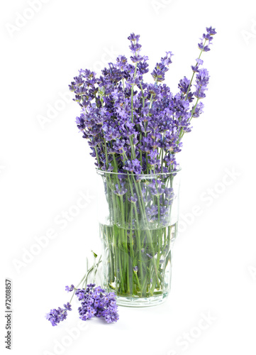 Keuken foto achterwand Lilac lavender in a glass isolated on white