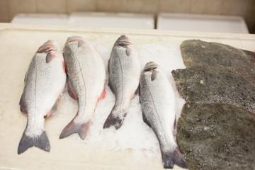 Fresh fish on plastic plate