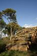 Tas de bois en forêt