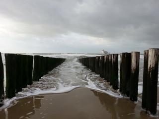 Möwe auf Wellenbrecher am Strand von Domburg