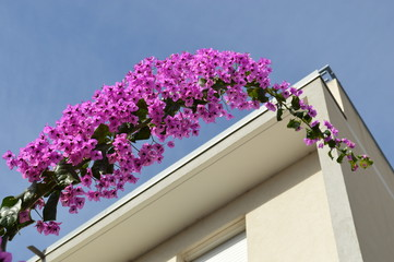 terrasse&bougainvillea3