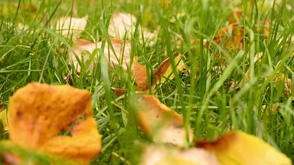 Grass with leaves with slide effect in autumn
