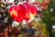 Obrazy na płótnie, fototapety, zdjęcia, fotoobrazy drukowane : Love heart balloons, outdoors