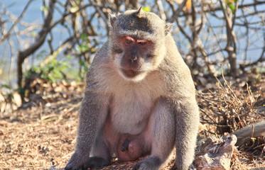 Dispirited monkey