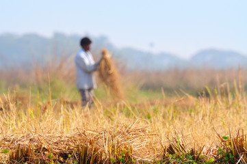 Indian rural man working in the field