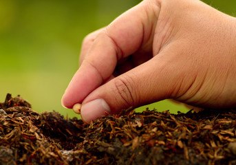 Male hand seeding for planting over green environment