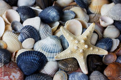 Starfish and seashells collection - 72035072