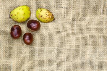 Sweet chestnuts decor
