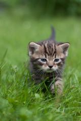 Kotek na trawie