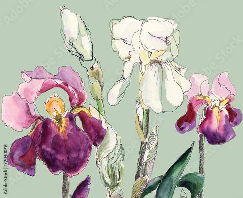 Papiers peints Iris Irises