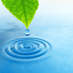 Green leaf with water drop and ripple