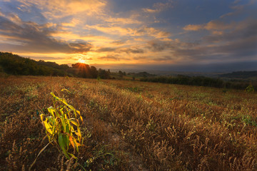Dawn at the neglected agricultural land