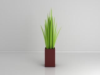 Decorative plant isolated on white.