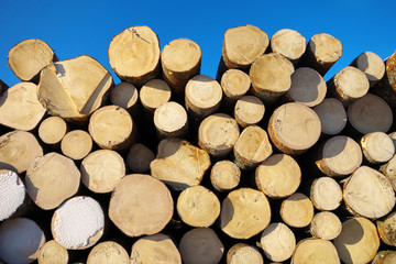 Saw log stack.