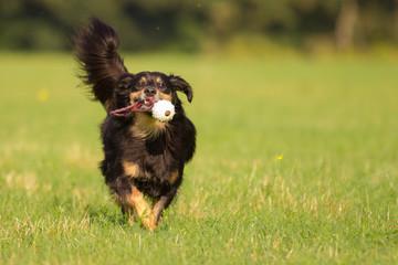 Hund in Action