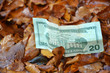 Autumn dollar