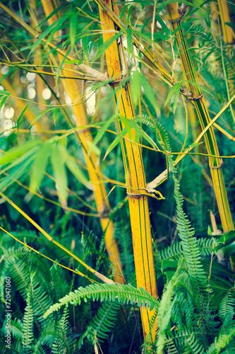 In de dag Bamboo Bamboo Plants