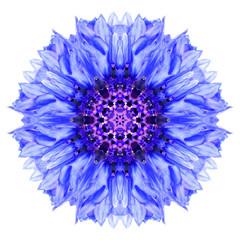 Blue Cornflower Mandala Flower Kaleidoscope Isolated on White