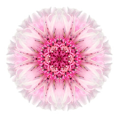 Pink Cornflower Mandala Flower Kaleidoscope Isolated on White