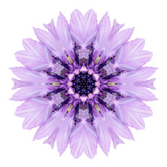Purple Cornflower Mandala Flower Kaleidoscope Isolated on White