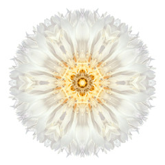 White Cornflower Mandala Flower Kaleidoscope Isolated on White